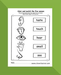 The 5 senses preschool kindergarten worksheet