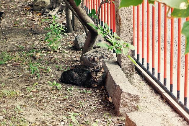Today's Cat@2017-05-23
