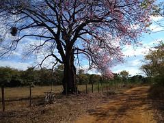 Parque Sapucaia