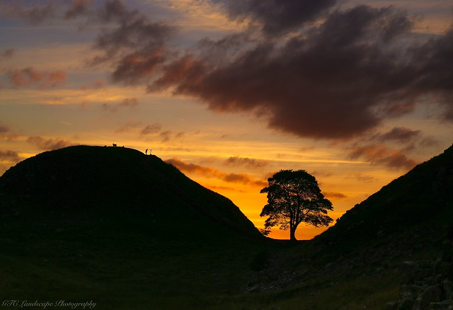 Sycamore Gap, Hadrians Wall, Canon EOS 6D, Canon EF 24-70mm f/4L IS USM