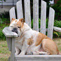 #dogalize Affaticamento del cane: sintomi e cause https://t.co/tGUnmrrRfI #dogs #cats #pets https://t.co/nRpdow6oci, dogalize
