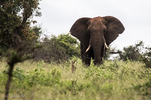 afrika sydafrika krugerpark mpumalanga za