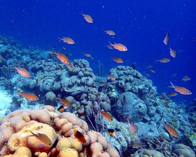 Scad Reef - Bonaire 2017