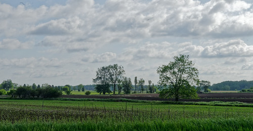 cloud fields corn eatoncounty eatonrapidstownship sky maize 2853 may michiganpeatmossfactory tree road paved d300 nikon michigan 2015 nikond300
