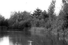 Pond, Central Maine - September, 1972