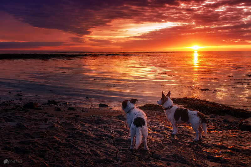 Dogs at dawn...