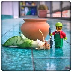 Oggi MiniG si da al giardinaggio 🌾🌷