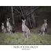 Mob of kangaroos in bushland by sugarbellaleah