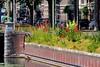 Stokroos in Den Haag by Roel Wijnants
