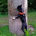 Julie-Baum hoch