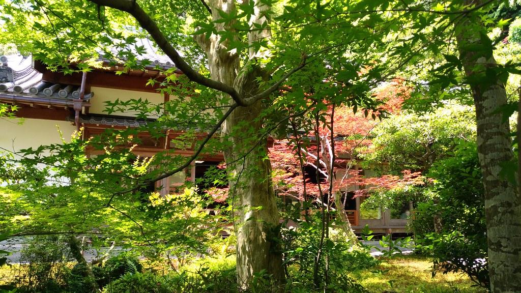 鈴虫寺 庭園
