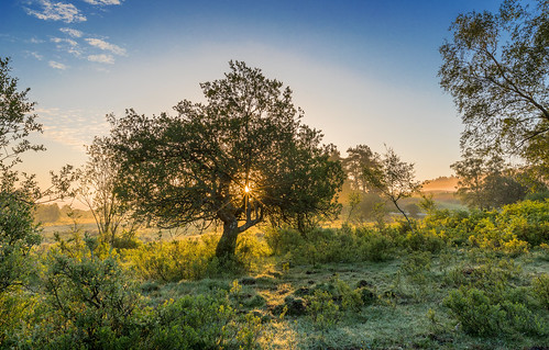 apple tree flare bracken sun sunrise rockfordcommon newforest landscape