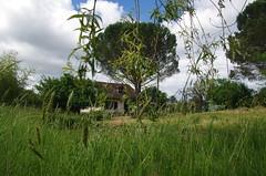 Saint Michel de Double, Périgord vert