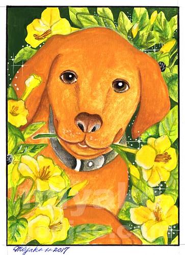Dog with Yellow Four O'clocks