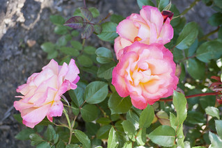Brookside Gardens  (53)