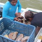 Sea cucumber fishing season 2016 (Dzilam de Bravo, Yucatan, Mexico). Credit: Eva Coronado, National Polytechnic Institute, Mexico.