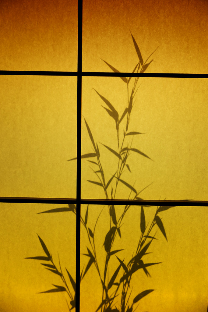 Bamboo, Sunlight & A Japanese Screen