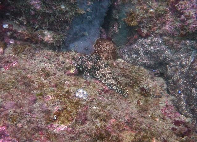 偶爾可見小於20公分的石斑停在礁盤上-蕭伊真攝, Panasonic DMC-FT4