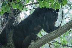 Bears-10