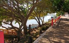 Porto de Barão de Melgaço, uma das entradas para o Pantanal #valerio2017 #pantanal #baraodemelgaco #matogrosso #brasil #travel  #boat #adventure #paraiso #trees #sunny #photo #xepa #byvaleriadelcueto  Explore @delcueto.studio