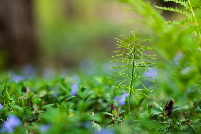 Green !, Nikon D800, AF-S Nikkor 85mm f/1.4G