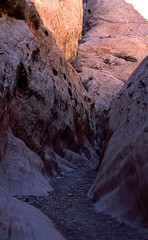 CAT 273   Little Wild Horse Canyon, San Rafael Reef UT,  March 16 2007 (Custom)