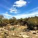 008e ~ Bandera Creek