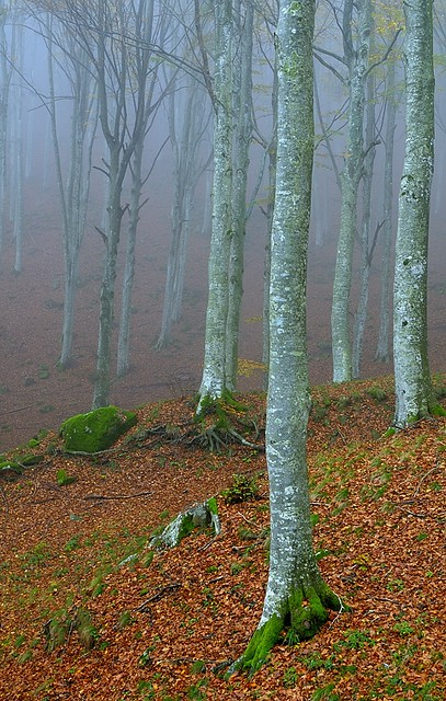Italy, Autumn forest