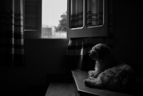 Autor: Jose Luis Suerte ©