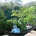 Birding in the canopy (Fernando Alba, Canopy Family)
