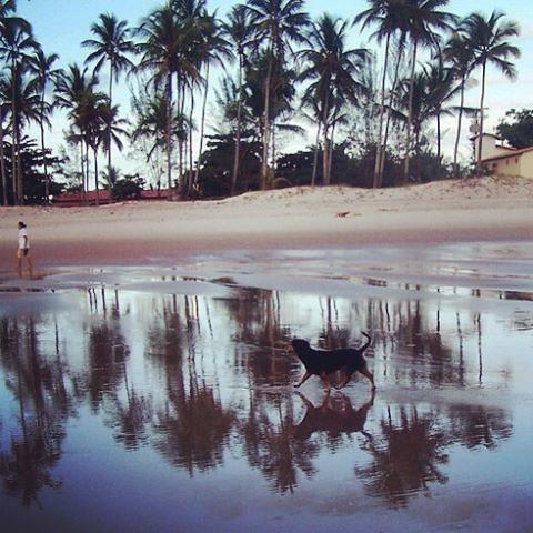 Morning walk #costabrasileira #canavieirasbahia #dogwalking #morningpictures #morningwalk #sobrelugares #folkcreative #palms #palmtrees #travelpic #travelgram #instatravel