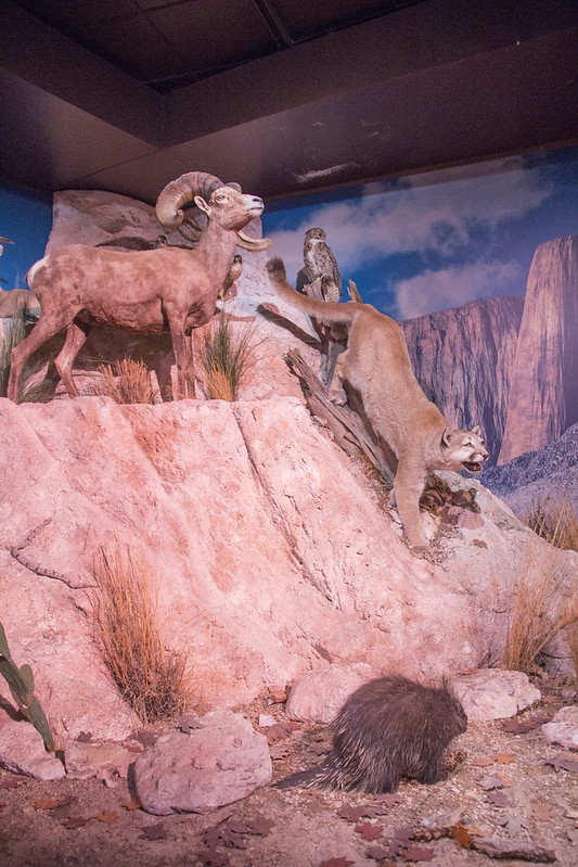 Museum of Natural Science_44