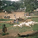Small photo of Sheep and spinach Ibadan market