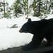 Bear Jasper Nationalpark