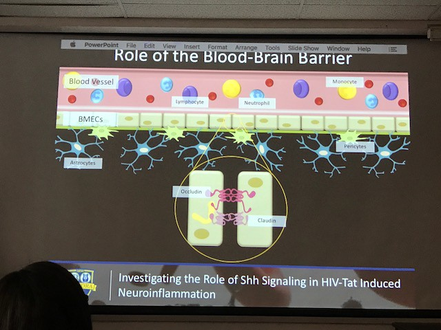 Presentation on the Role of the Blood-Brain Barrier