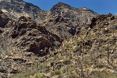A Rugged Hillside of Rocks, Boulders and Saguaro Cactus