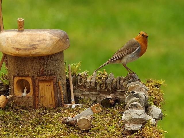 Robin  in micro garden  on small wall