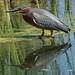 Heron by Bridgeport Mike