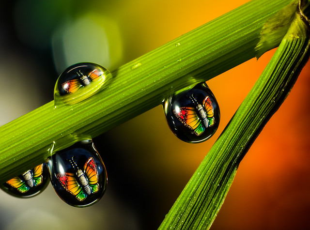 Trapped in drops