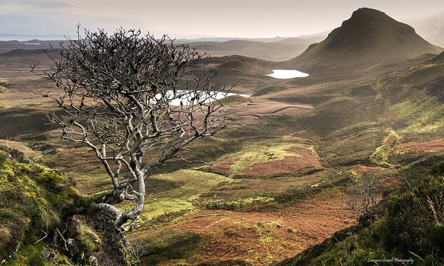 The Trotternish tree., Nikon D4, AF-S Nikkor 24-70mm f/2.8E ED VR