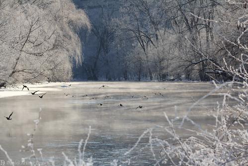 a2 annarbor february huronriver mi michigan bird birds fog frost ice landscape mist river snow waterfowl wildlife winter unitedstates us