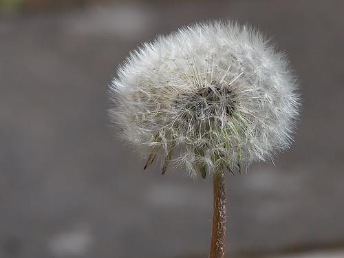 flower macro panasonic fz300 closeup blomma närbild håkan jylhä