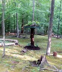 Old tree re-purposed