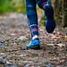 Trail Coureur des Bois Québec 2017