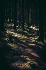 Im Wald bei Olfen