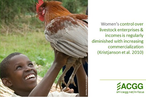 Where chickens and women rule - postcard #13 (image credit: ILRI)