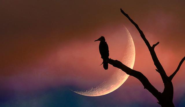 Here Comes The Night!, Panasonic DMC-FZ330