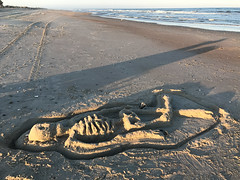 Skeleton Found on Beach