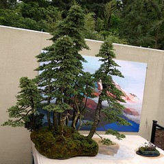 #bonsai #mini #forest #island w/ #art #artwork ... #museum #botanicalgarden #PNW #federalway #evergreen #tree #miniature