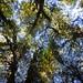Bosque de mañíos by Mono Andes